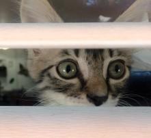 Foster in window 2