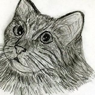 cat sketches nana s whimsical world