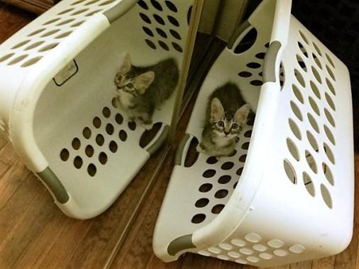 basket-laundry