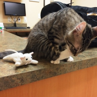 cat-toy-at-vet-2