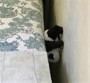 panda-by-wall-2