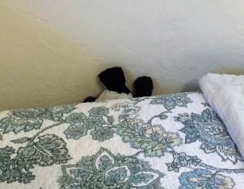 panda-by-wall