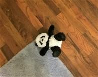 panda-on-floor-bedroom
