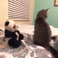 panda-talk-2