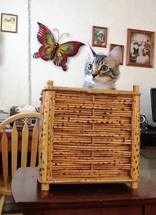 in-wicker-basket