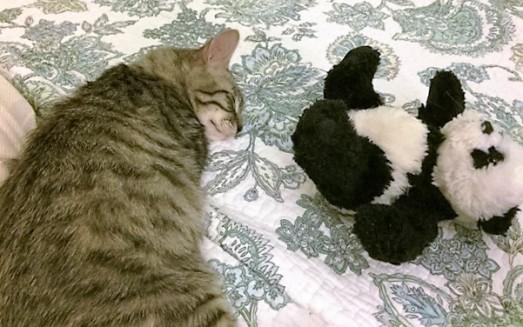 nap-with-panda