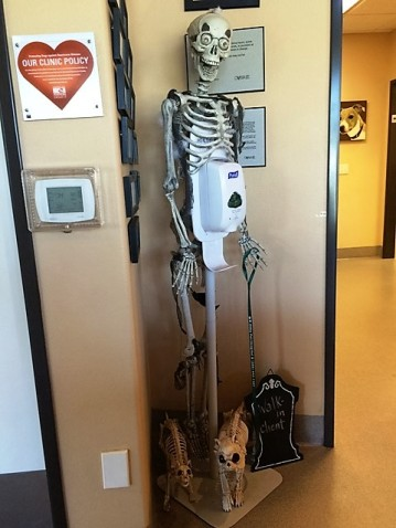 skeleton-at-vet