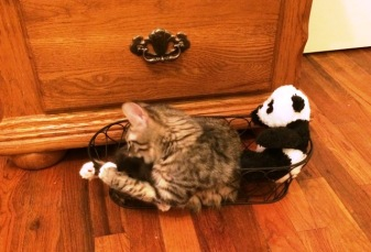 with-panda-in-basket
