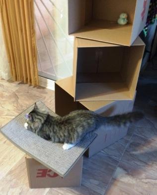 beginning-box