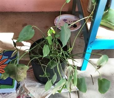outside-plant