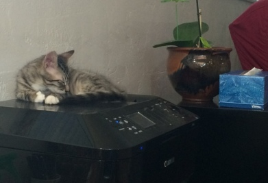 sleeping-on-printer