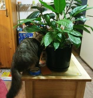 found-plants-1