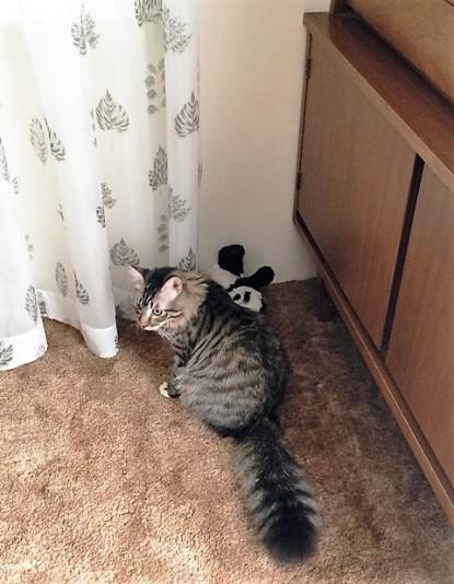 panda-curtain