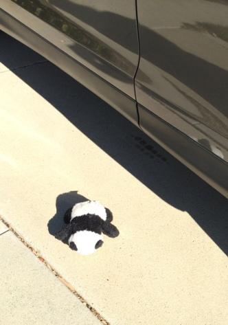 panda-fell-out