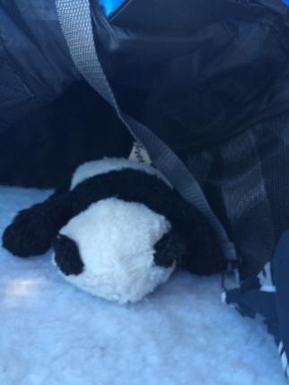 panda-travail