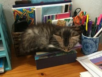 asleep-on-box