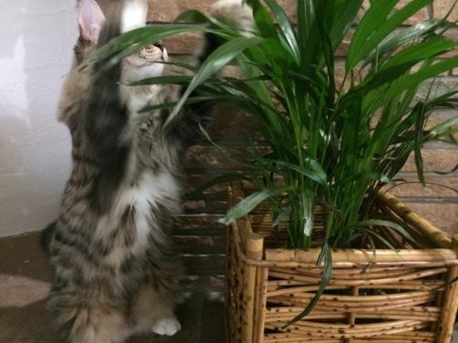 behind-plant