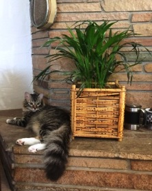 guarding-plant