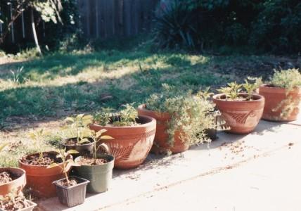 plant-pots-2