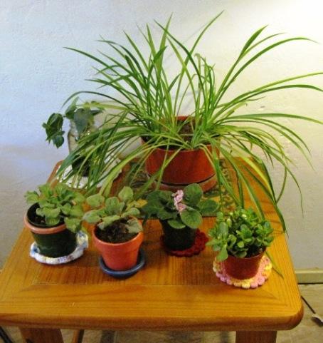 plants-2012