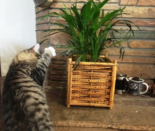 playing-with-plant