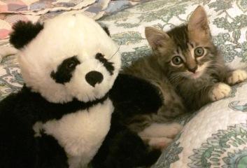 with-panda