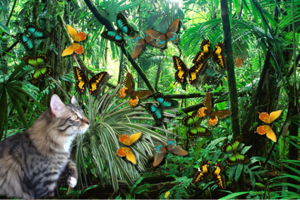 foster jungle with butterflies for blog