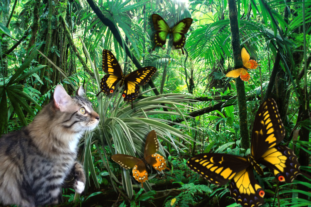 foster jungle with butterflies in