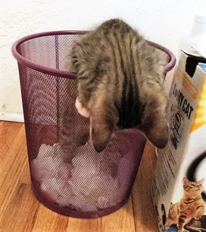 getting out of wastebasket