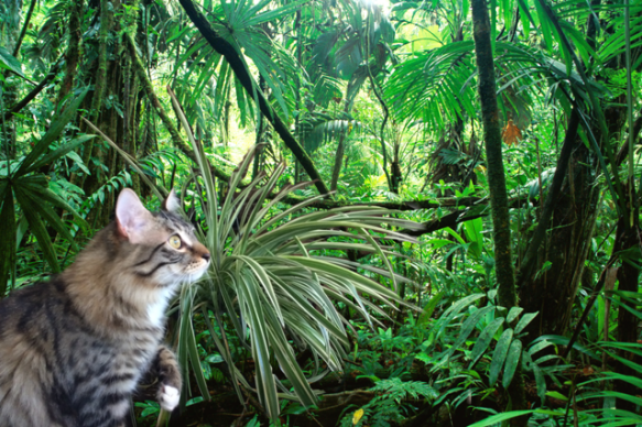 spider plant in jungle 1
