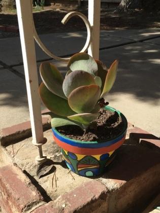 succulent upright