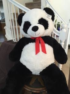 biggest panda