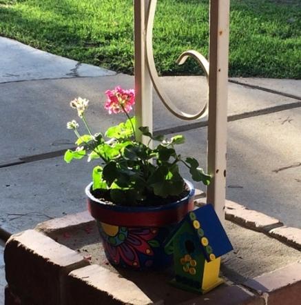 geranium in sun