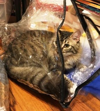 in bag 2