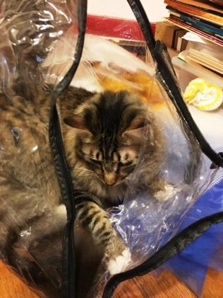 in bag 3