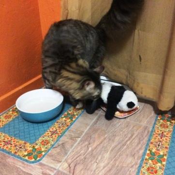 panda in cat food