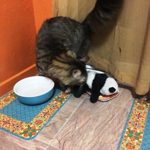 panda in cat food