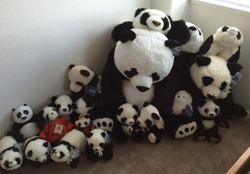 pandas in corner