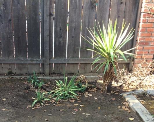 pointy plant