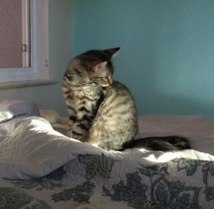 sun on bed 3