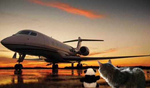 found plane