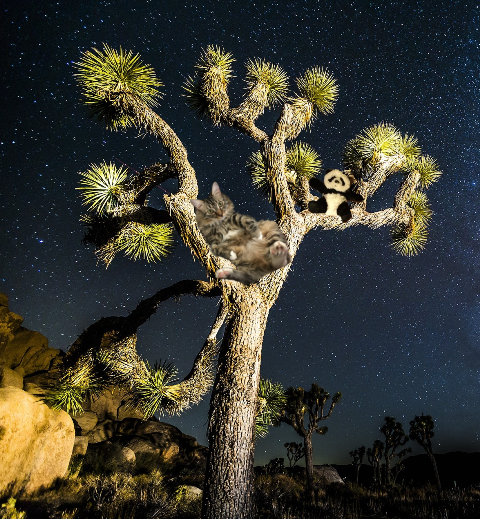 in joshua tree