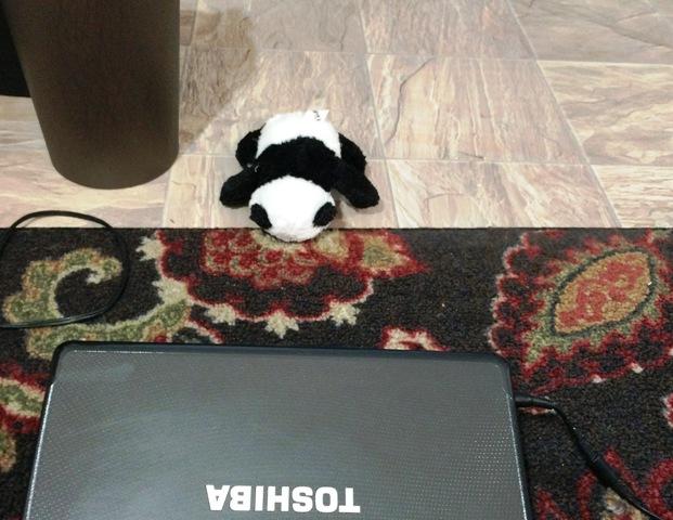 panda bowing