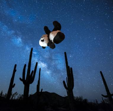 panda tumbles down