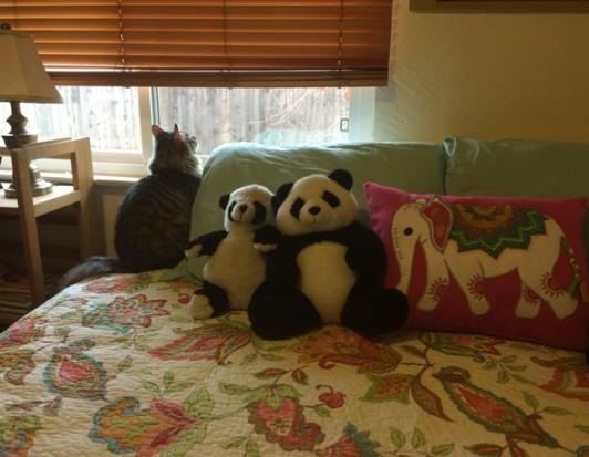 pandas in guest room 2