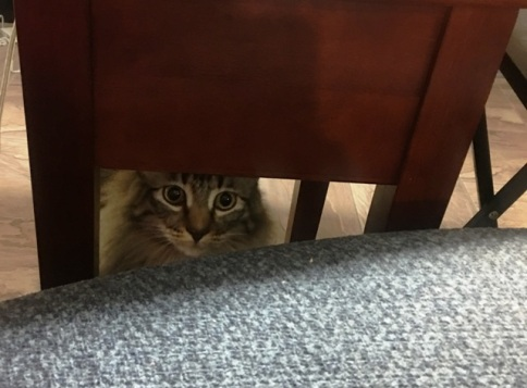 peeking at Kate