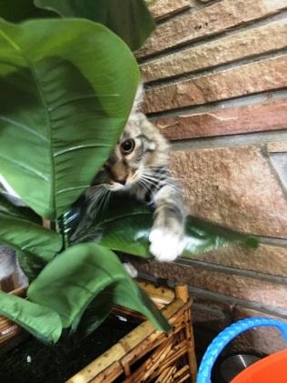 inspect plant