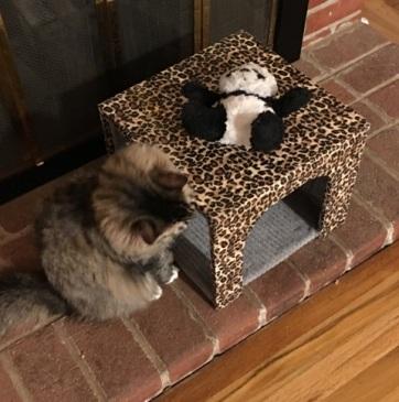 panda on box