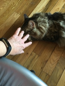 hand and fitbit