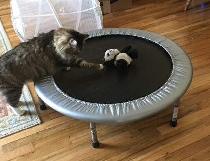 panda on trampoline 1